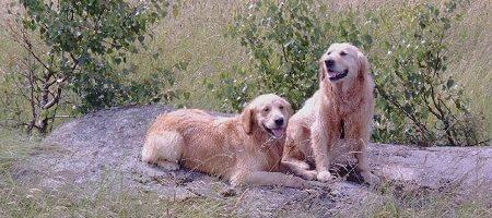 Urlaub mit Hund im Waldviertel 450x254pxl